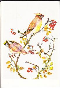 Finland - Cedar Waxwings Painting by Anja Hamalainen