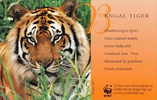 Bengal Tiger World Wildlife Fund Warning