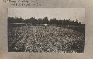 RP: WELLSTON , Michigan, 1911 , A Beggie Crop