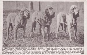 SPRINGFIELD , Massachusetts, 00-10s ; Blood Hound Dogs , Forest Lakes