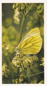 Grandee Vintage Cigarette Card British Butterflies 1984 No 27 Green Veined White