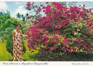 Guam Magnificent Bougainvillea Native Flower