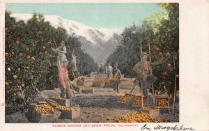 Orange Groves and Snow Fields, California, Early Postcard, Unused