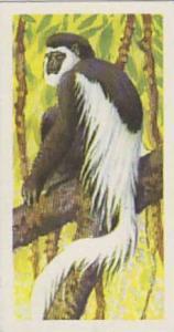 Brooke Bond Tea Vintage Trade Card African Wildlife 1962 No 6 Colobus Monkey