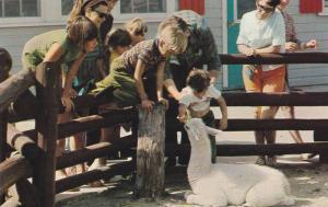 Child feeds Llama at Aunt Sally's Farm in Assininboine Park Zoo, Winnipeg, Ma...