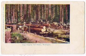 Logging Tall Timber WA