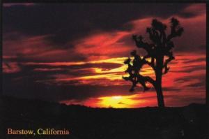 Cactus With Spectacular Desert Sunset Barstow California