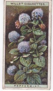Cigarette Cards Wills Wild Flowers A Series No 26 Peppermint