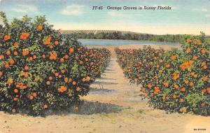 US Sunny Florida, Orange Groves 1939