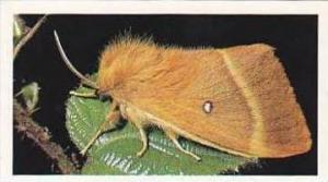 Grandee Vintage Cigarette Card Britains Wayside Wildllife No 4 Oak Egger Moth