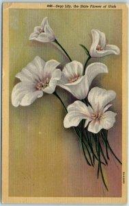 Vintage Utah Postcard SEGO LILY, The State Flower of Utah Curteich Linen 1950