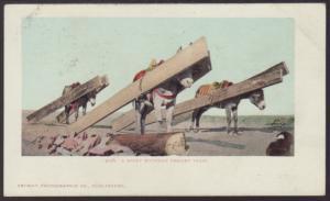 Rocky Mountain Freight Train,Donkeys Postcard