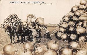 Almena Kansas Farming Pays vegetable exaggeration real photo pc Z16203