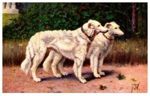 Dog ,  Pyreenes