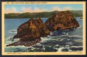 Sea Lions on Seal Rocks,Oregon Coast Highway