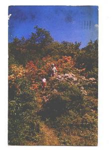 Flame Azalea, Mountian Laurel, People Hiking, Blue Ridge Mountains Virginia, ...