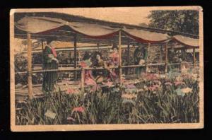 018985 Japan Geisha girls in flowers garden Vintage PC