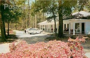 MS, Biloxi, Mississippi, Sea Gull Court, 1950s Cars, Dexter Press No. 10035-B