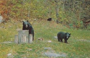 Black Bears having Lunch , Canada , 1950-60s