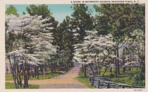 North Carolina Southern Pines Scene In Weymouth Heights Curteich