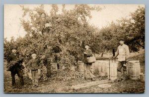 FRUIT HARVEST HART MI ANTIQUE REAL PHOTO POSTCARD RPPC FARMING