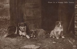 Family Of Collie Guard Dogs To Farm Barn Door Old RPC Postcard