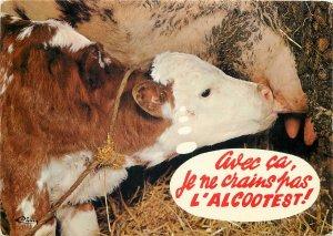 Animals France calf cow udder brown black  Postcard