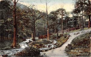 Shipley Glen Creek Forest Bradford