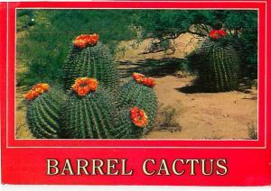 Barrel Cactus Desert Flowers Stores Water in Desert Orange  Postcard  # 6860
