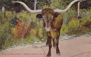 Texas San Antonio Texas Longhorn Steer Width Of Horns 9 Feet 6 Inches