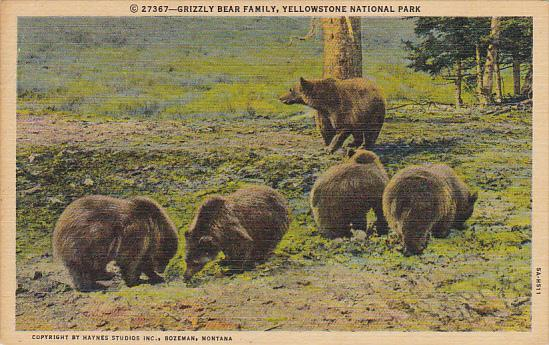 Grizzly Bear Family Yellowstone National Park 1953