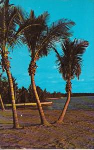 Florida Typical Palm Tree Lined Beach 1967