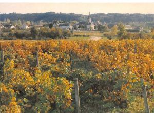 France Lhomme Le village de Lhomme vu du Vignoble