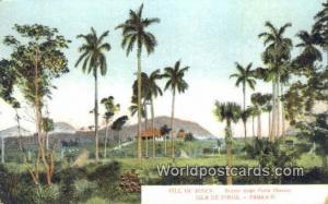 Cuba, Republica De Cuba Isla De Pinos Isle of Pines, Palm Grove