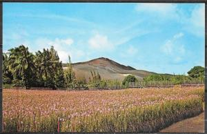 Hawaii, Pineapple Field in Lava from eruption, unused