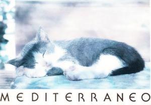 Meditteranean Cat Sleeping In Local Tropical Sun Postcard
