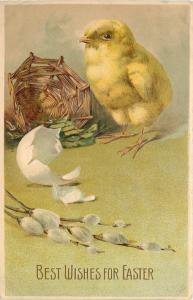 Easter~Newborn Chick With Steely Eye~Egg Shell~Pussy Willows~Embossed~1912