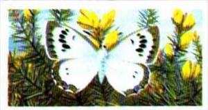 Brooke Bond Tea British Butterflies No 34 Large Blue