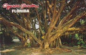 Florida Cypress Gardens The Banyan Tree