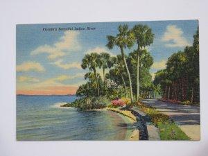 Florida's Beautiful Indian River FLORIDA Vintage Linen Postcard