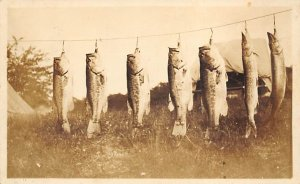 Fishing Postcard Several Fish Hanging on a String 1924