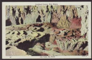 Lily Pads,Carlsbad caverns,NM Postcard