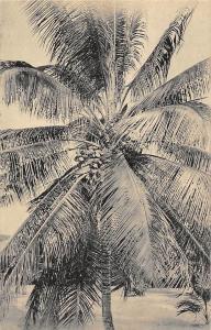 Gabon Moanda en Omstreken, Een Kokosboom, Un Cocotier, A Coconut Tree