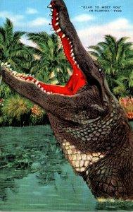 Florida Alligator Glad To Meet You