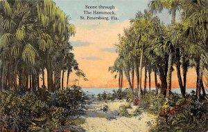 Scene Through the Hammock Trees St Petersburg FL