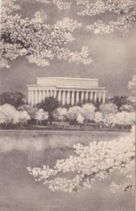 Washington D C Cherry Blossoms and Lincoln Memorial