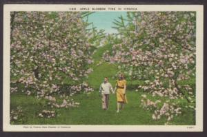 Apple Blossom Time in Virginia Postcard