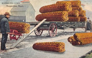 G33/ Wenatchee Washington Postcard 1910 Exaggeration Corn Cobs Comic