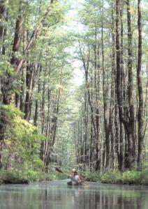 Im Spreewald River Canoe Forest