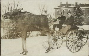 Orono ME UMO Campus Moose Harnessed to Wagon Unusual 1908 RPPC Postcard